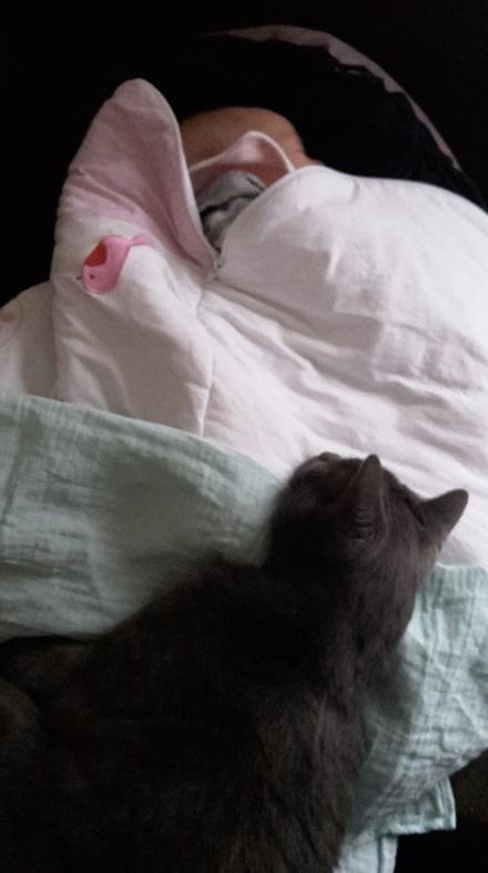 Le chat l'aime déjà !